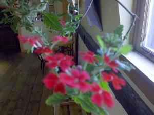 flowersdroid