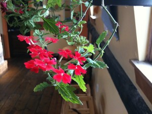 flowersiphone