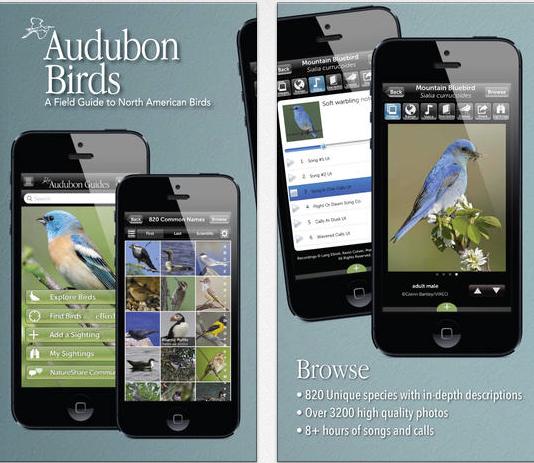 Audubon birding pro