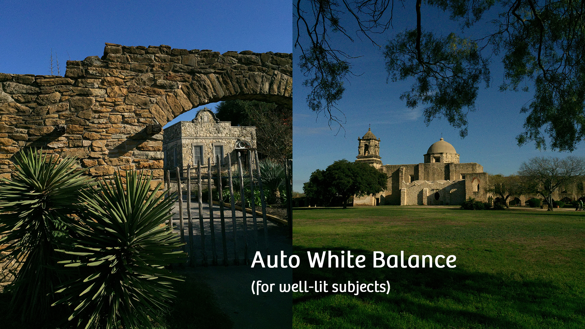 Making the Most of Your iPhone's Camera by Understanding the Concept of White Balance