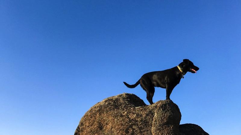 Adventure dog iphone 7