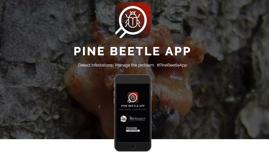 pine_beetle_app
