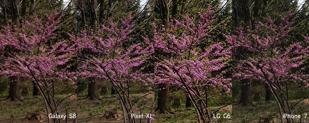 Tree comparison 1