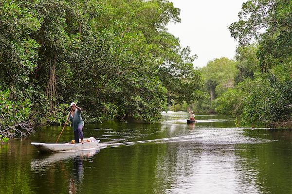 Apple Mangroves Man Canoe River 04222019 big jpg large 2x
