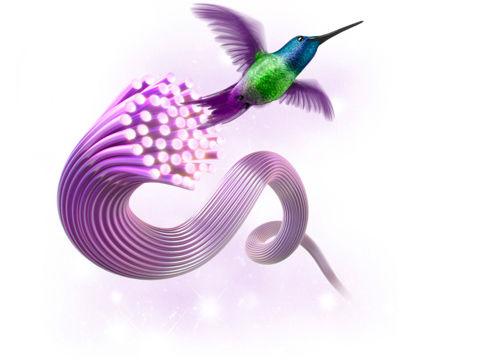 Telus hummingbird